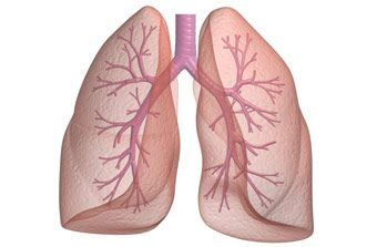 Lungs, Lungs Diseases, Functions of Lungs
